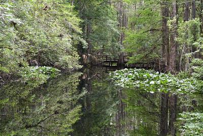 Highlands Hammock State Park