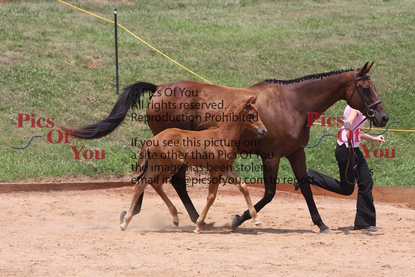 Alden's Illusion and 2008 foal