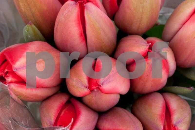 Tulips 2315.jpg