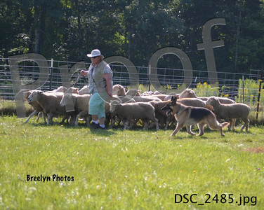 Sunday GSDCSNH Herding Aug 10, 2014