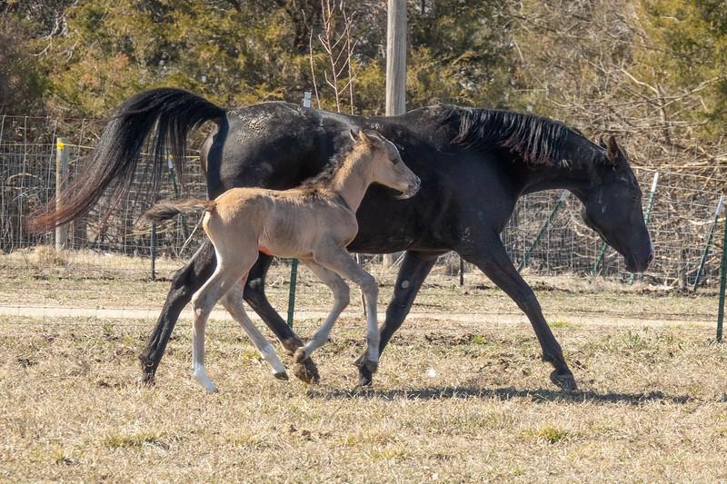 foal-5.jpg