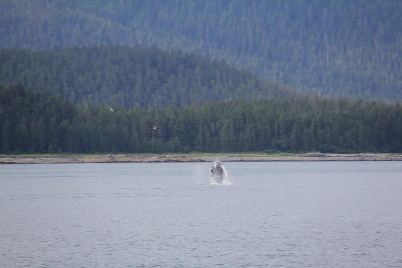 20160717-063 - WEX-Breaching Whale.JPG
