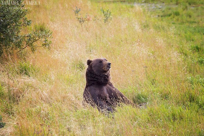 Bear-7-2.jpg