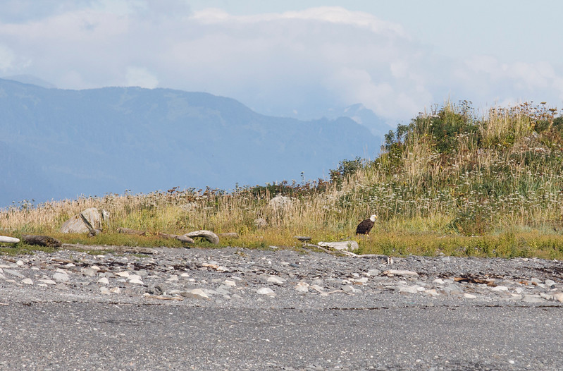 2017-08-08=Juneau-107.jpg