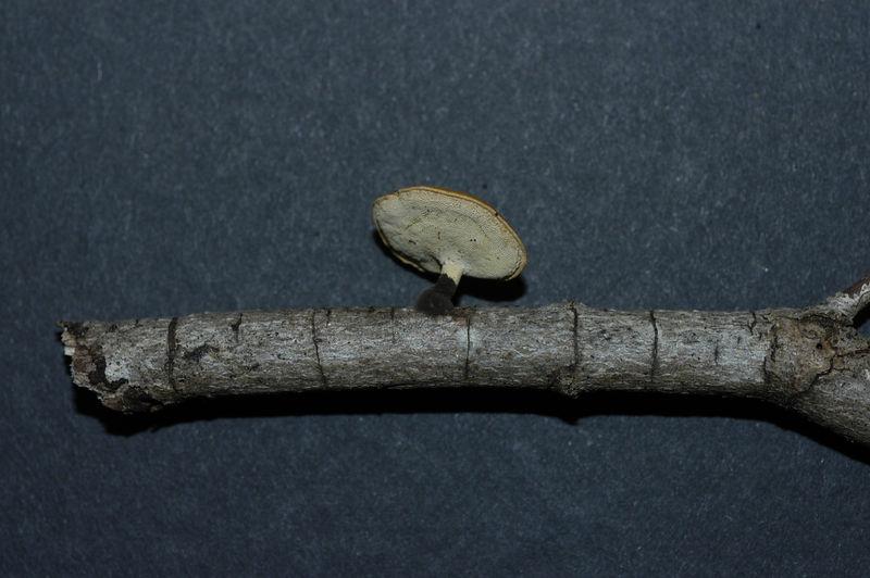 Mycology 056.jpg