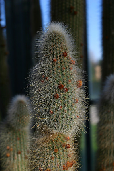 A very prickly cactus.