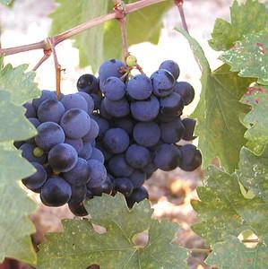 2004-Wine Making