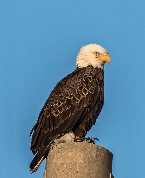Melbourne Eagle Nest BE27 - October 26, 2014