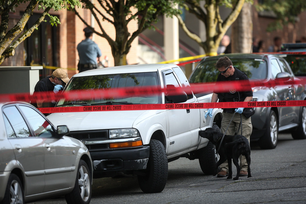 . A bomb-sniffing dog helps search a vehicle after a shooting at Seattle Pacific University on Thursday, June 5, 2014, in Seattle. A lone gunman armed with a shotgun opened fire  in a building at the small Seattle university, fatally wounding one person and injuring three others before a student subdued him with pepper spray as he tried to reload, Seattle police said. (AP Photo/seattlepi.com, Joshua Trujillo)