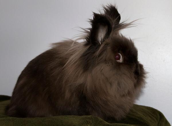 Rabbits - ICAN - Invermere Companion Animal Network