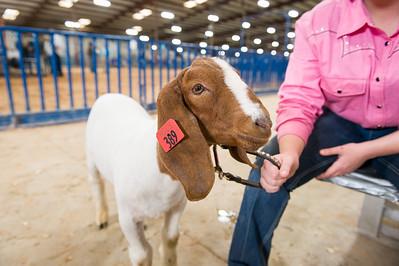 2016 (Dec) Bexar County - Goats