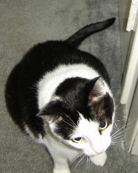 2007 06 22 - Cats 13.JPG