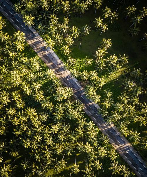 Palmeiras Road.jpg