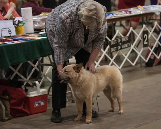 2016 Central PA Australian Dog Club Regional Specialty
