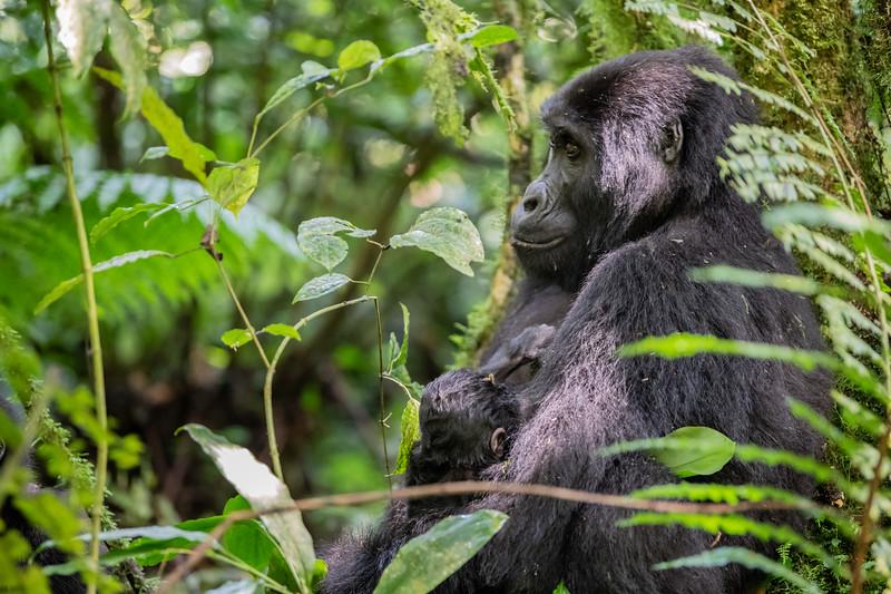 Uganda_T_Gor-625.jpg