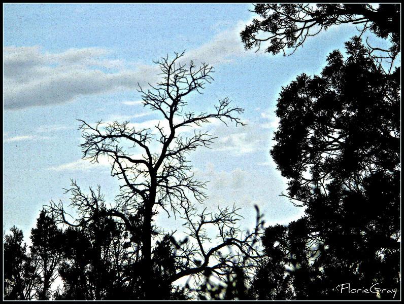 Evening falling, Secret Canyon, AZ
