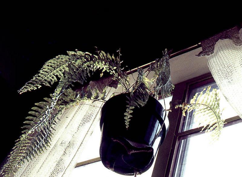 mary's window.jpg