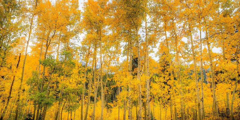 Fall in Colorado