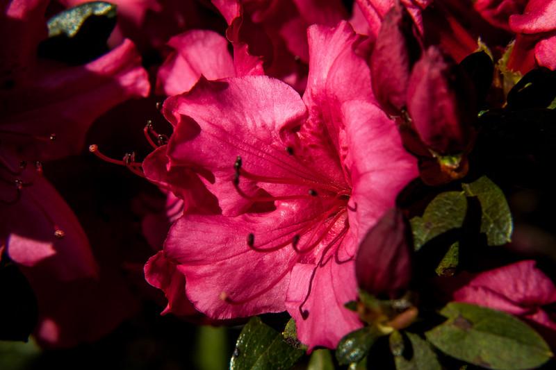 160417_6321 Flowers_13-1.jpg
