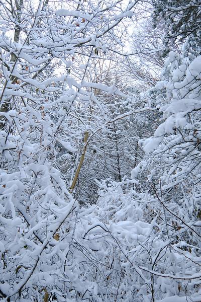 Frosty Treescape
