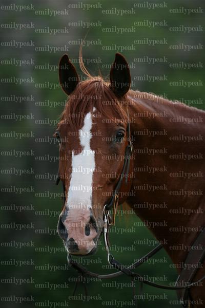 America's Favorite Trail Horse:Sunday