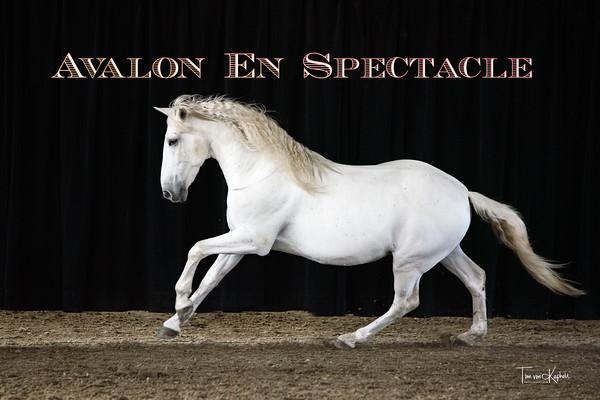 Avalon En Spectacle