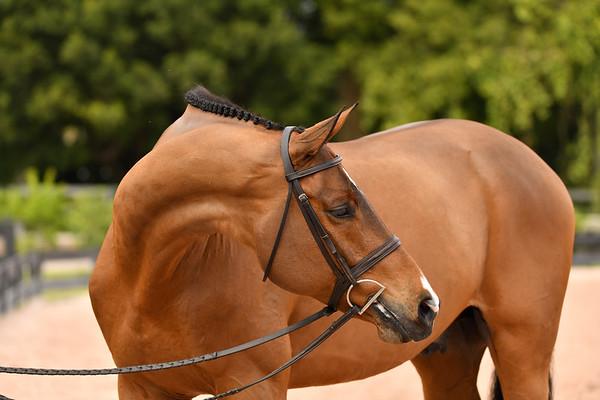 Elegant Equus