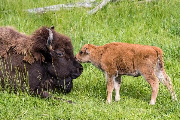 Northwest Trek Wildlife Park Project