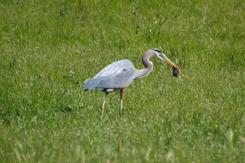 Crane11.jpg