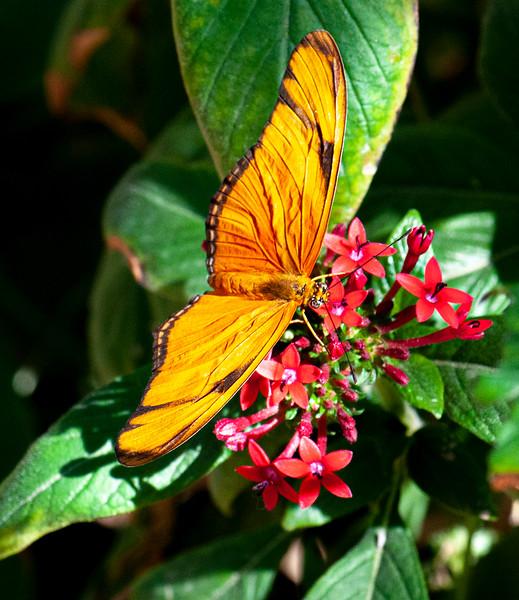 Butterflies-4.jpg
