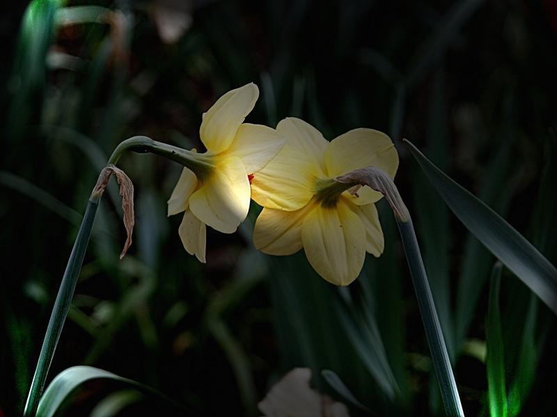 flower couple 2.jpg