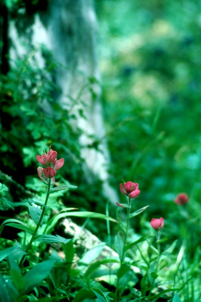 amh FLOWERS (1156).jpg