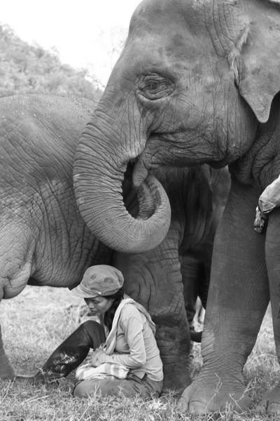 Chiang Mai Elephant Nature Park December 23 2010