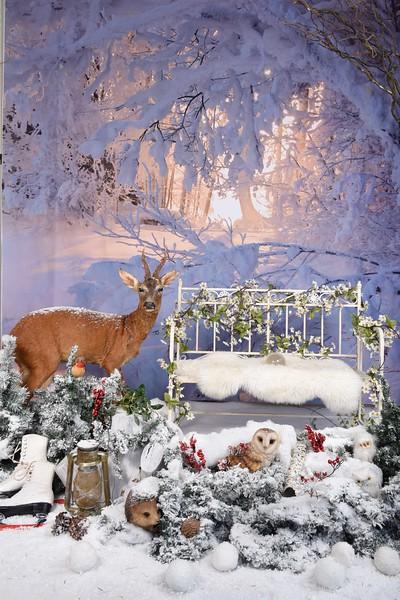 deer frost.jpg