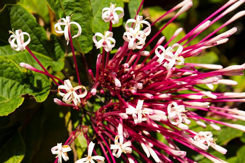 naples_botanical_garden_0021-LR.jpg