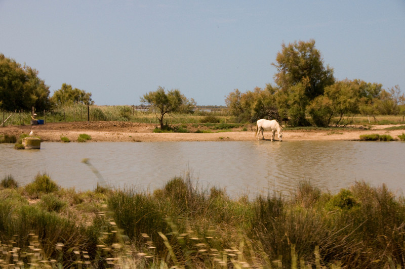 horse camarguedrinks