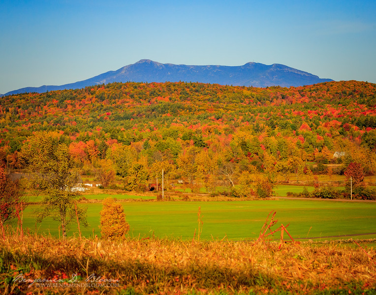 Mount Mansfield Foliage