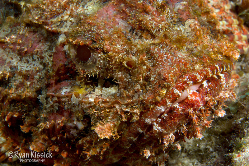 Face of a scorpionfish (notice the mouth in the lower right and the eye in the middle/left of the frame)
