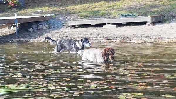 Dogs at Kim's Camp - Sept'19
