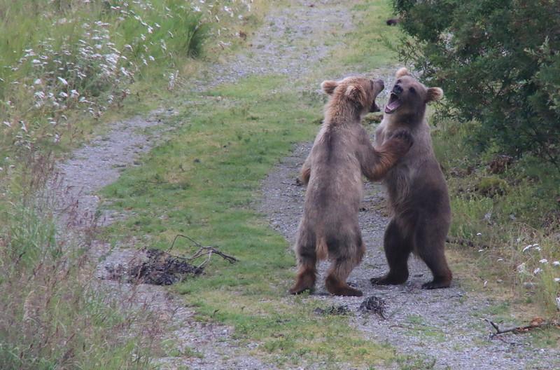 Baby Bear Karate.jpg