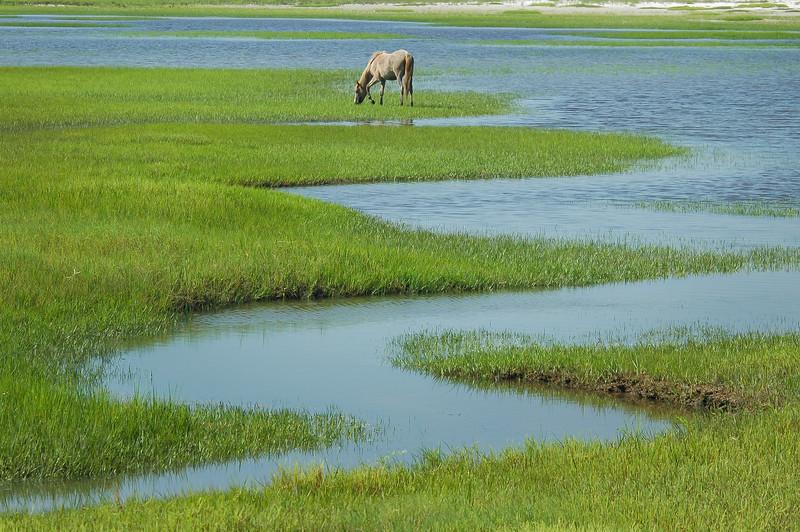 Wild Horse and Salt Marsh Tidal Creek #1