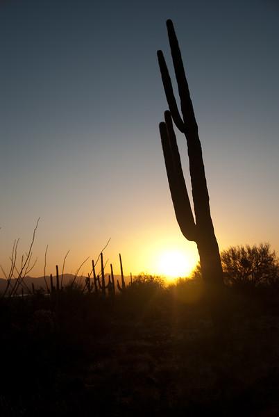 Tucson, Az - Oct 1, 2009-0015.jpg
