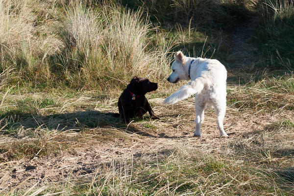 Ellie & Archie 2012-1117