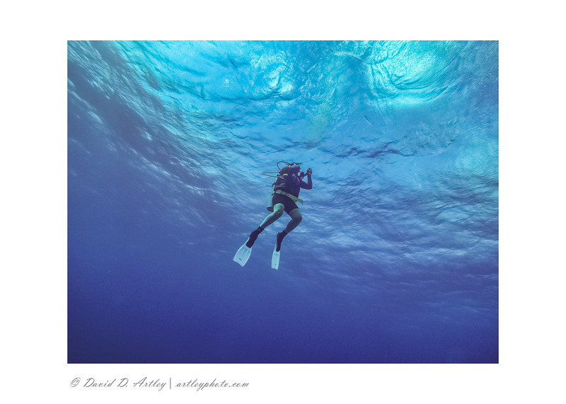 SCUBA Diver descending to reef, Grand Cayman, Cayman Islands