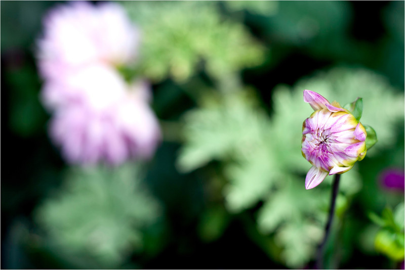20111015_Flower4.jpg