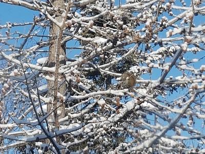 2017-02-25 Snow on Trees