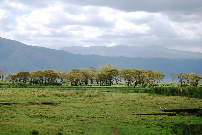 Ngorongoro (203).JPG