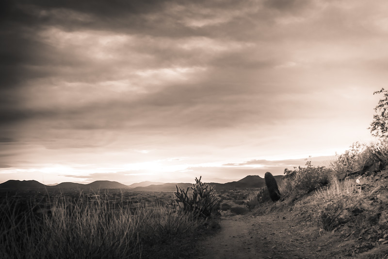 Desert Trail at Sunset in Black and White