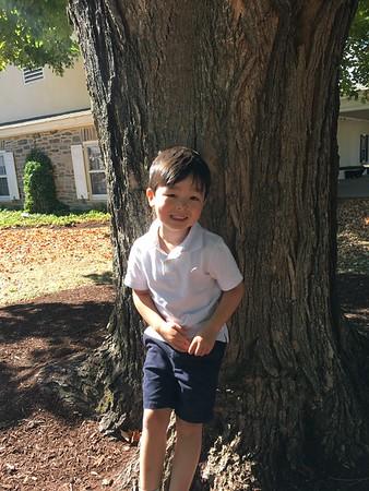 PreKD Maple Tree