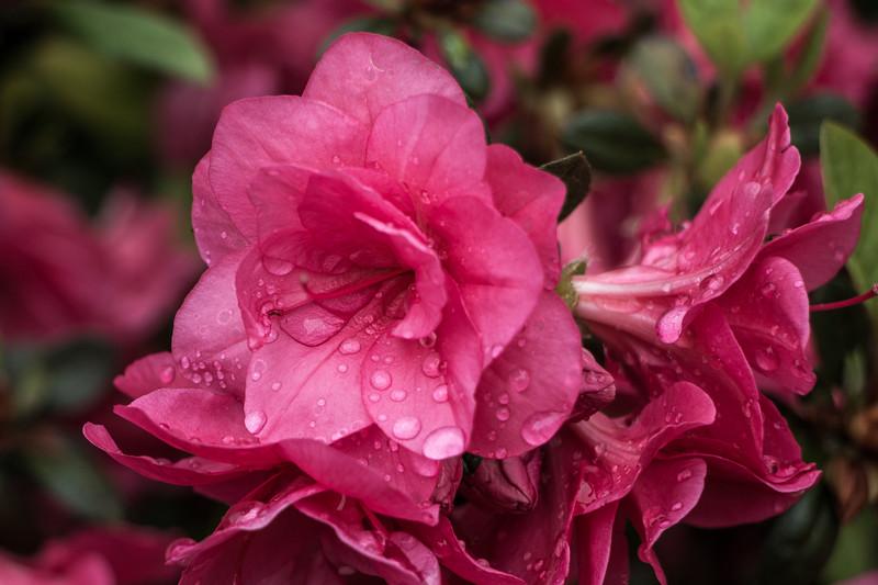 160501_46_6321_Flowers-1.jpg
